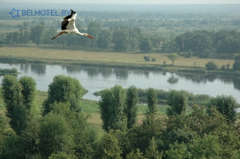 Hotels in Belarus - hotel Turist Bobruisk - Scenery of the locality